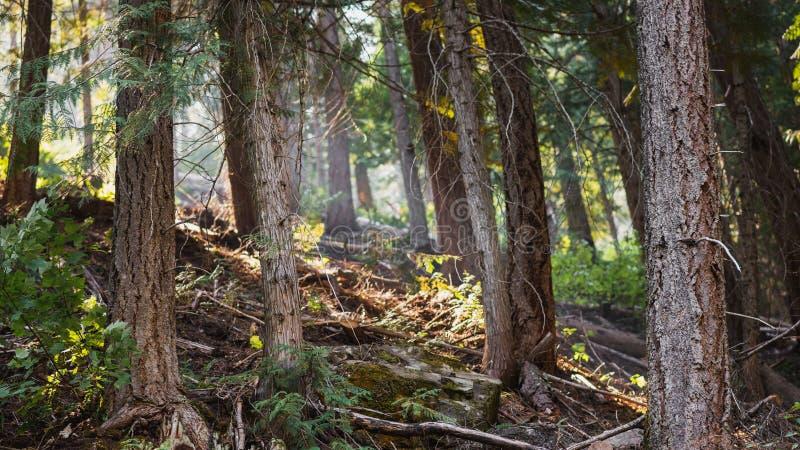 Het onderzoeken van het Bos royalty-vrije stock foto's