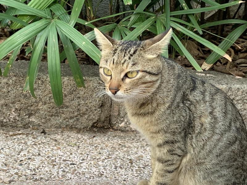 Het onderzoeken van de katten op stratenlevensstijl stock afbeelding