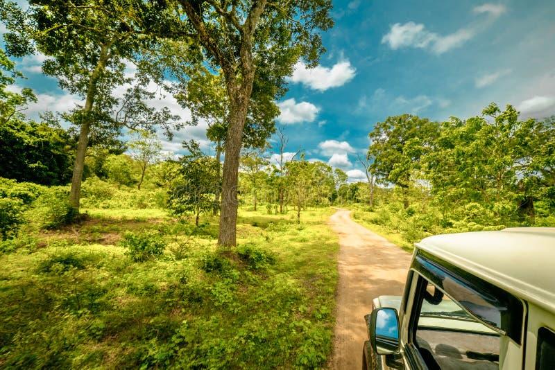 Het onderzoeken van verbazende aard bij jeepsafari in Sri Lanka stock afbeeldingen