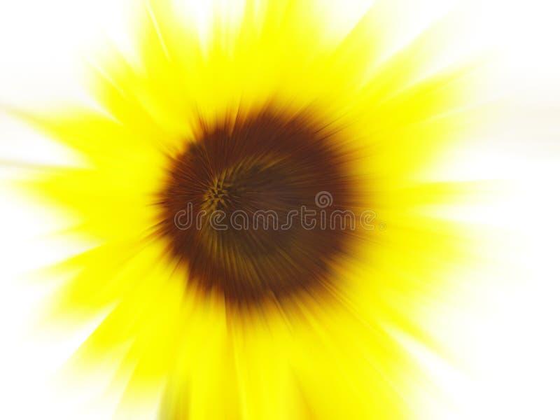 Het onduidelijke beeld van de zonnebloem royalty-vrije stock afbeeldingen