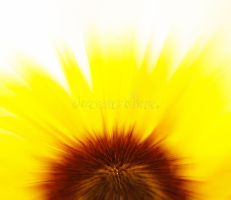 Het onduidelijke beeld van de zonnebloem stock fotografie
