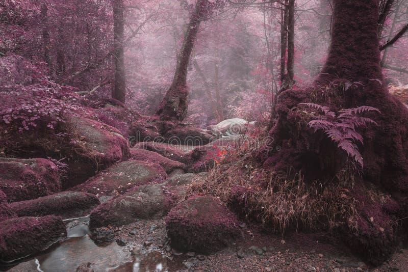 Het ongebruikelijke surreal afwisselende beeld van het kleuren boslandschap stock foto's