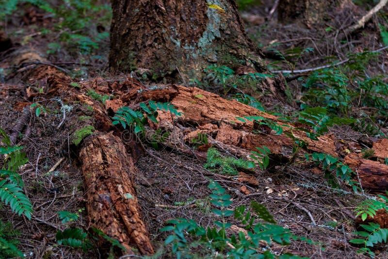 Het ontbinden van bosvloer met hout en installaties stock fotografie