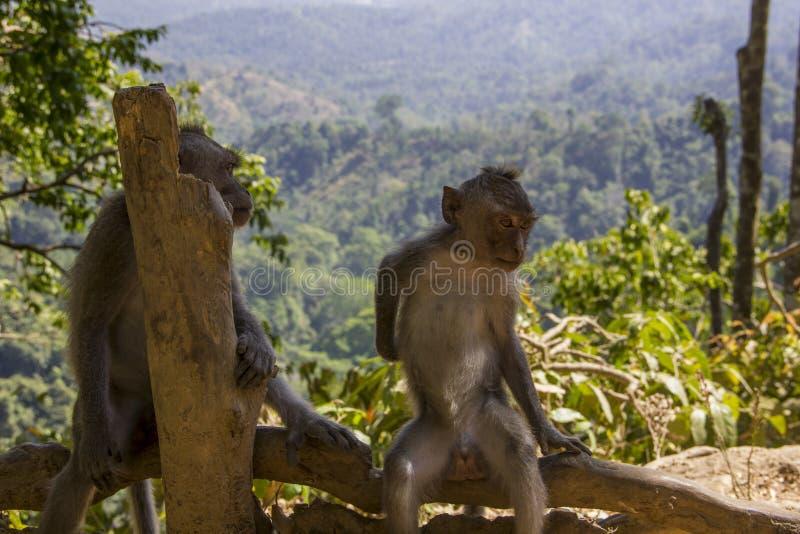 Het ontspannen de aap geniet van de mening stock afbeelding