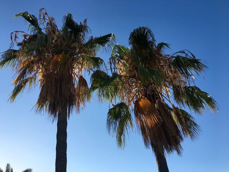Het ontspannen kokospalmen stock afbeelding