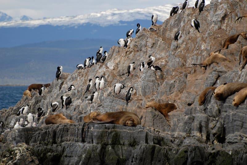 Het ontspannen zeeleeuwen en zeevogels. royalty-vrije stock foto's