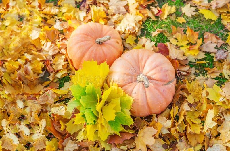 Het ontwerp van de de herfstgrens met twee pompoenen en bladeren Bos achtergrond stock afbeeldingen
