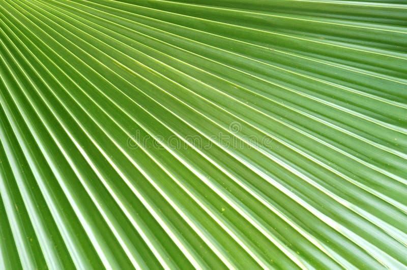Het Ontwerp van het palmblad stock fotografie