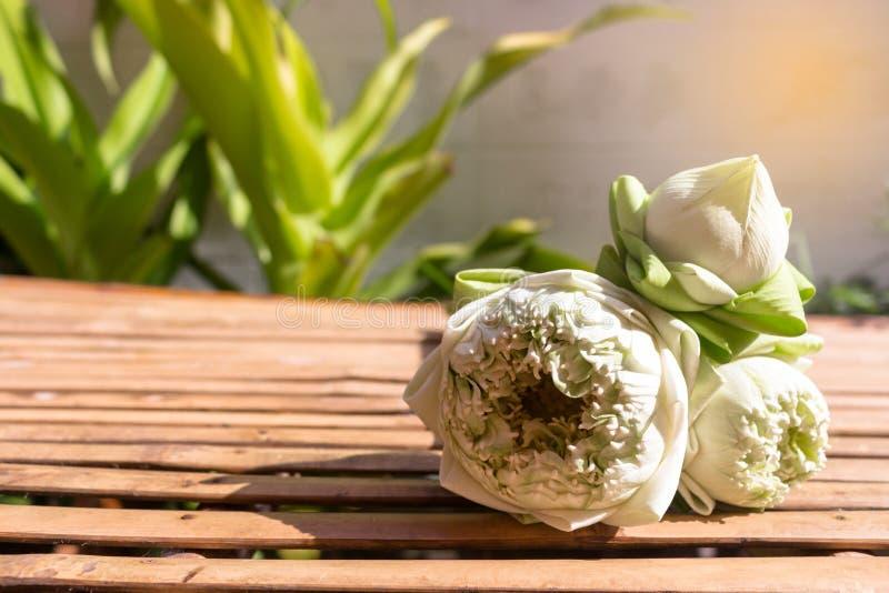 Het ontwerp voor lotusbloem drie bloeit groene knoppen op van het bamboe houten lijst en exemplaar ruimte op installatieachtergro stock afbeeldingen
