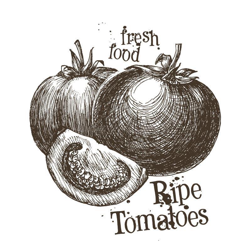 Het ontwerpmalplaatje van het tomaten vectorembleem vers royalty-vrije illustratie