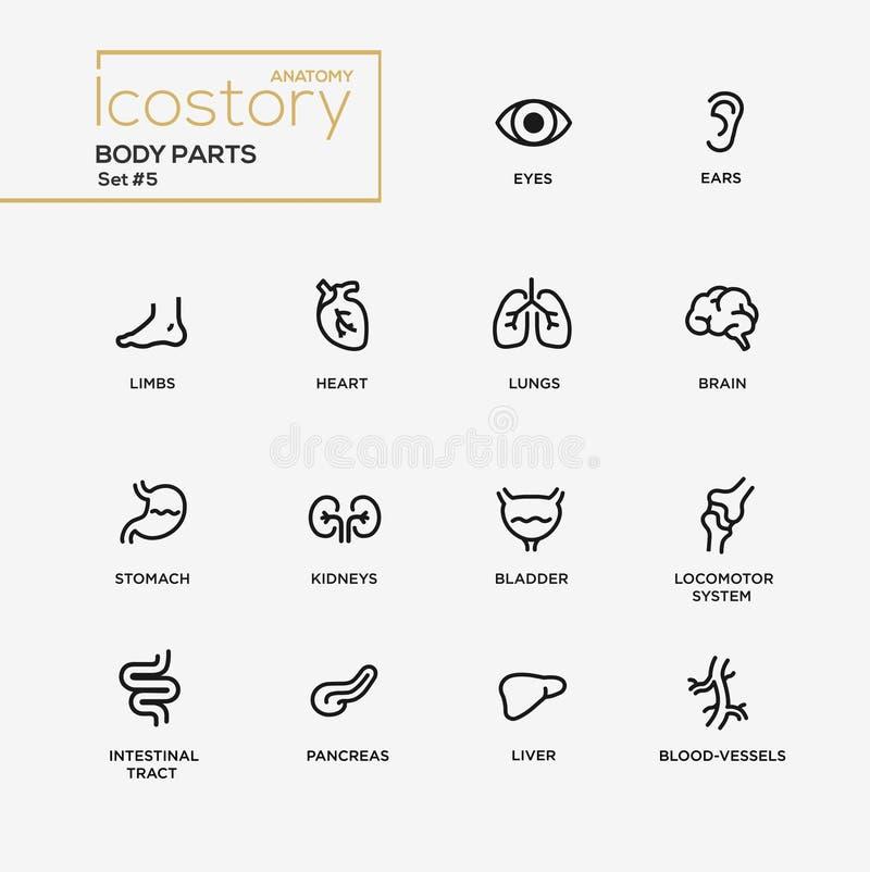 Het ontwerppictogrammen van de lichaamsdelen moderne eenvoudige dunne lijn, geplaatste pictogrammen stock illustratie