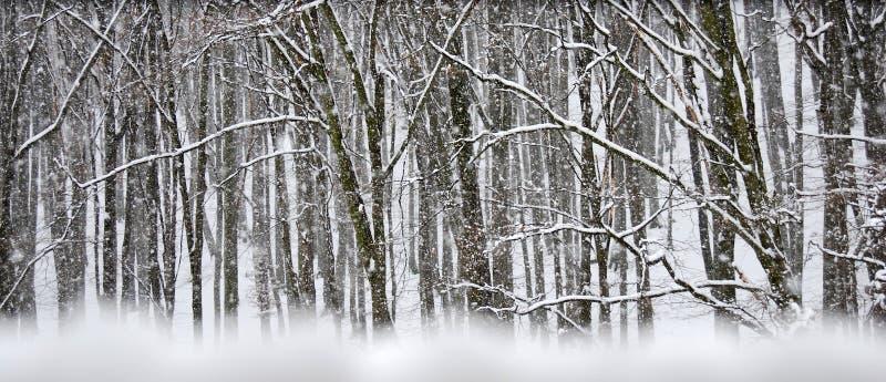 Het onweer van de sneeuw in de winterbos royalty-vrije stock foto