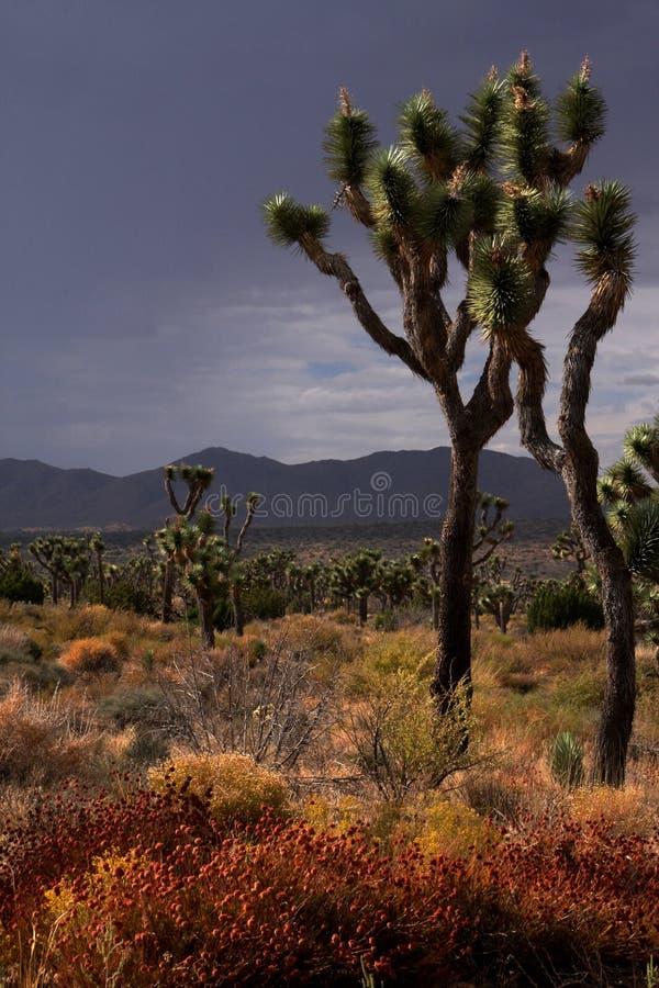 Het onweer van de woestijn royalty-vrije stock foto's