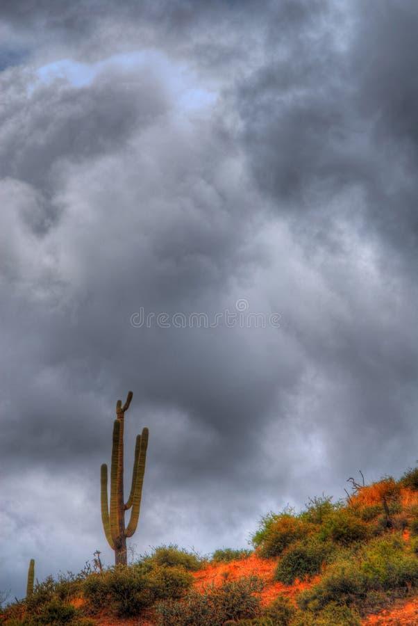 Het Onweer van Saguaro royalty-vrije stock fotografie