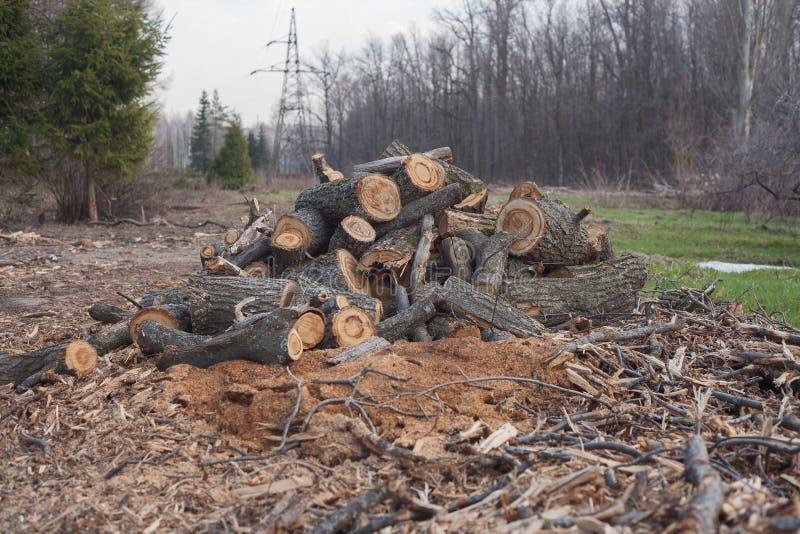 Het onwettige felling van bomen in de bosecologie royalty-vrije stock foto