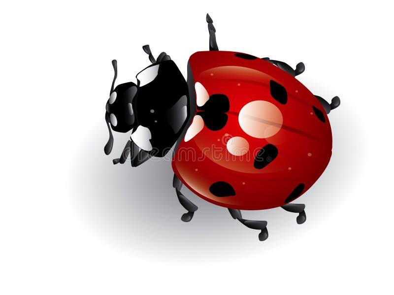 Het onzelieveheersbeestje stock illustratie