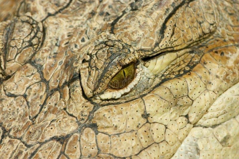 Het Oog van Croc stock foto