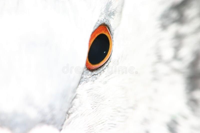 Download Het oog van de duif stock foto. Afbeelding bestaande uit iris - 283484