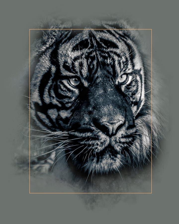 Het oog van de tijger royalty-vrije stock afbeelding