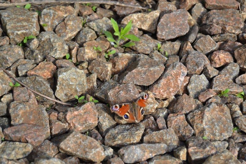 Het oog van de vlinderpauw royalty-vrije stock fotografie