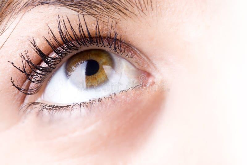 Het oog van het meisje stock afbeelding