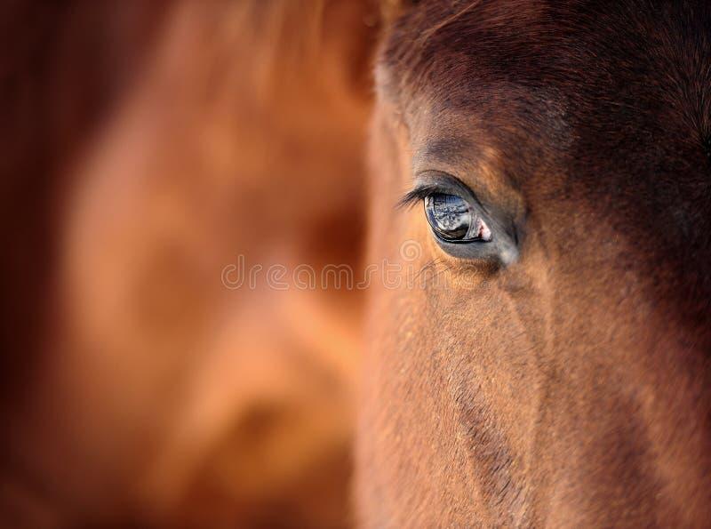 Het oog van het paard royalty-vrije stock foto's