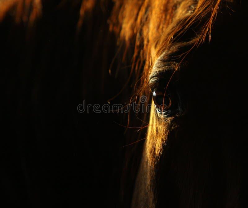 Het oog van het paard in dark royalty-vrije stock fotografie