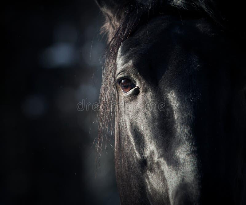 Het oog van het paard in dark royalty-vrije stock foto's