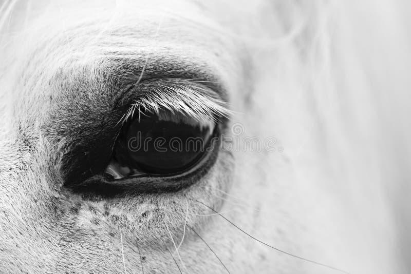 Het oog van het witte paard - zwart-wit kunstportret royalty-vrije stock foto