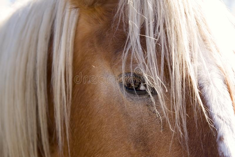 Het oog van het paard bij een dichte afstand wordt gezien die royalty-vrije stock foto's