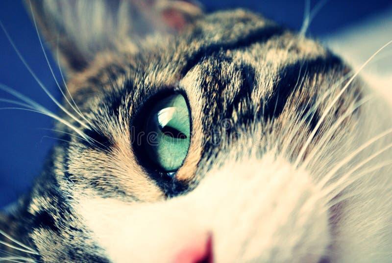 Het oogdetail van de kat stock fotografie