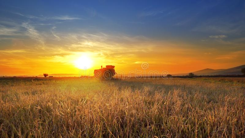 Het oogsten combineert gerst in de gebied het oogsten tarwe bij zonsondergang stock foto's