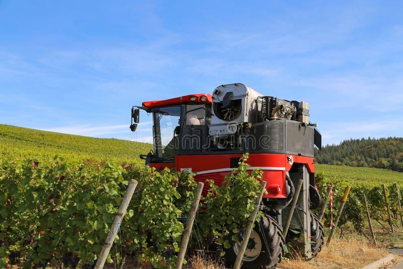 Het oogsten de druiven door a maaidorser stock afbeelding