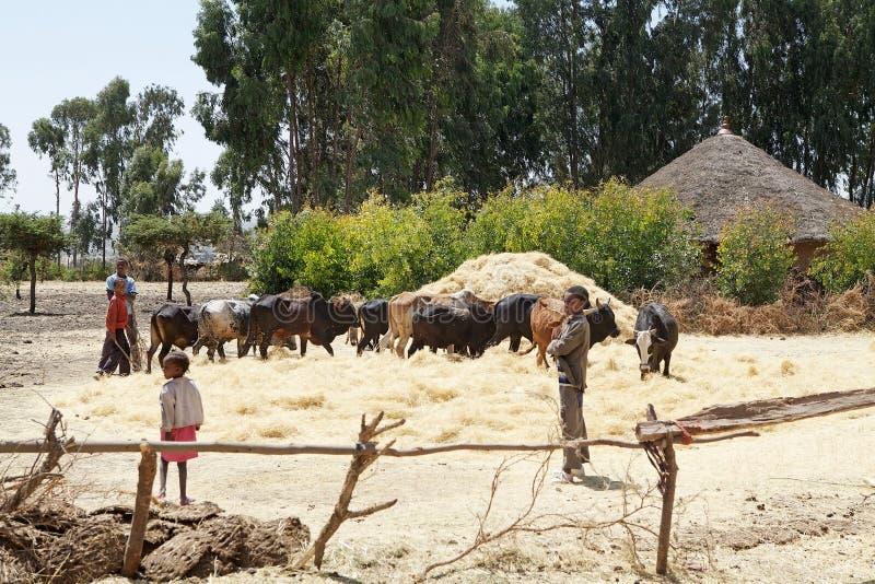 Download Het oogsten van Afrika redactionele stock foto. Afbeelding bestaande uit afrikaans - 29505848
