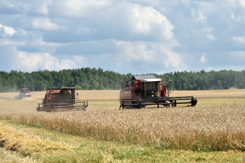 Het oogsten van tarwe Rusland stock foto's