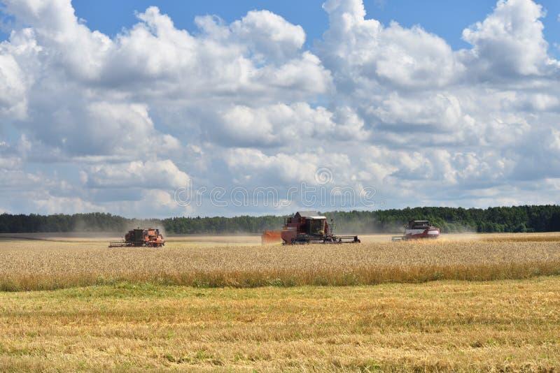 Het oogsten van tarwe Rusland stock foto