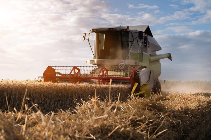 Het oogsten van tarwegebied met combineert stock fotografie