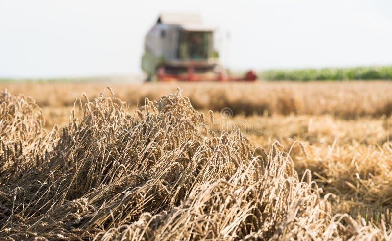 Het oogsten van tarwegebied met combineert royalty-vrije stock foto's