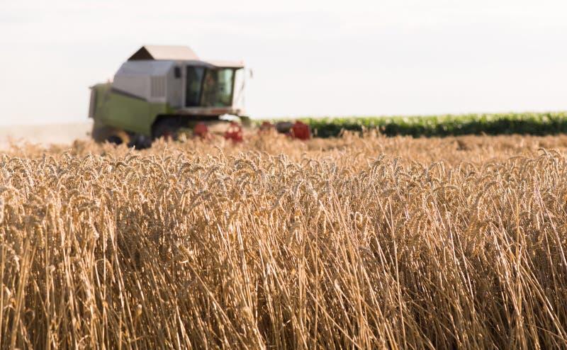 Het oogsten van tarwegebied met combineert royalty-vrije stock afbeelding