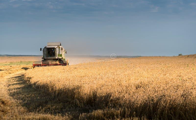 Het oogsten van tarwegebied met combineert stock foto