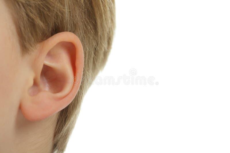 Het oor. royalty-vrije stock afbeeldingen