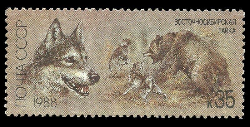Het oosten Siberische Laika stock afbeelding