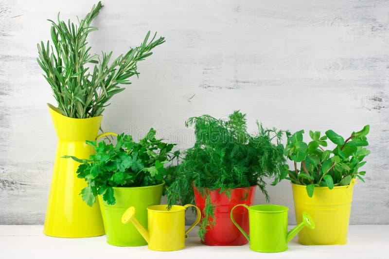 Het op smaak brengen greens in emmers stock fotografie