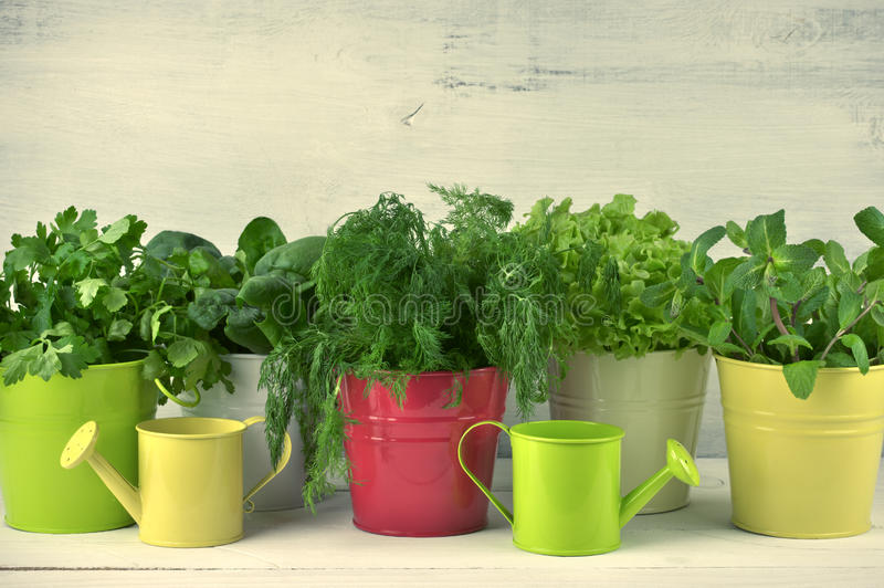 Het op smaak brengen greens in emmers stock foto