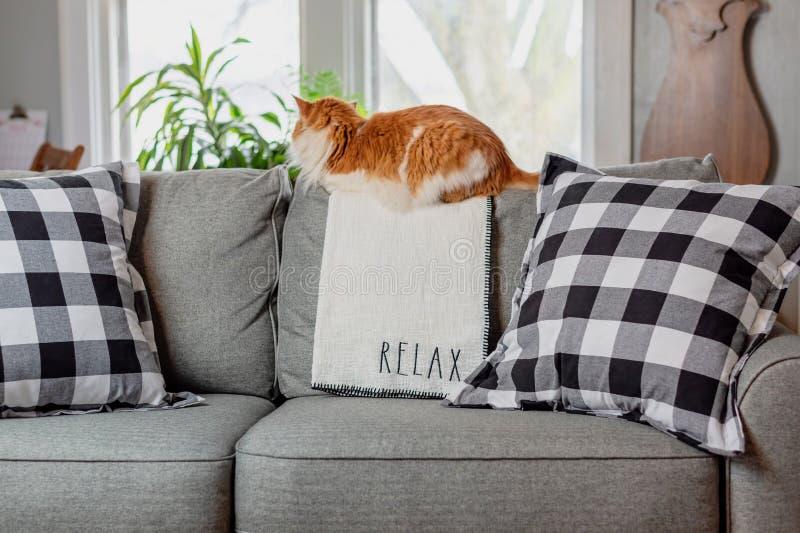 Het oranje kat ontspannen op de laag royalty-vrije stock foto's