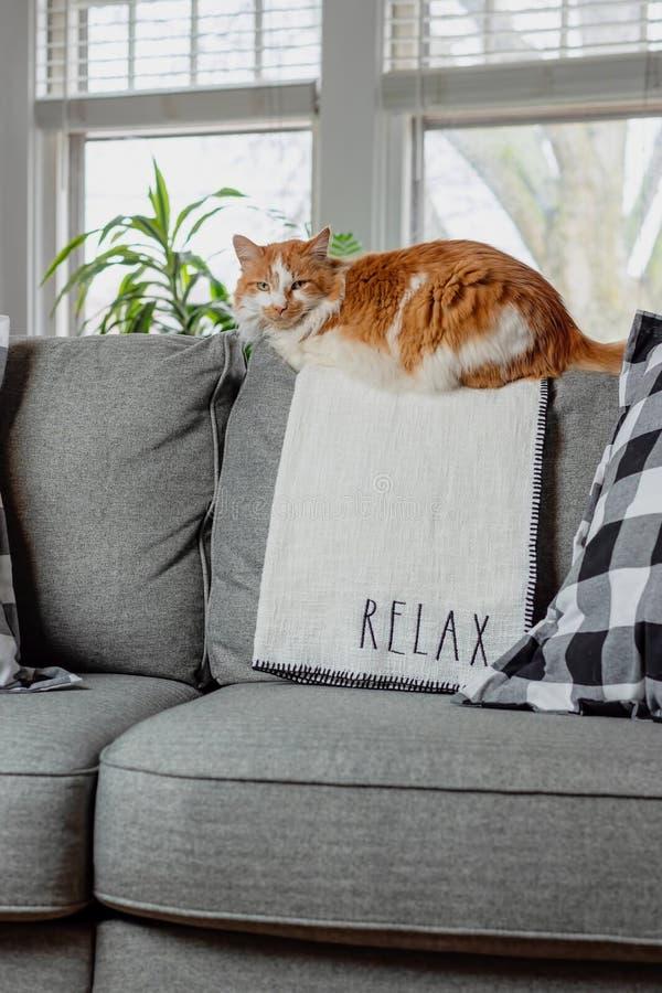 Het oranje kat ontspannen op woonkamerlaag stock fotografie