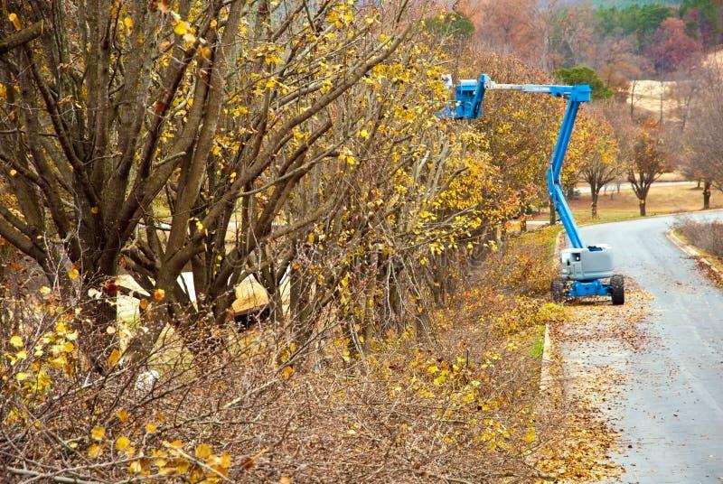 Het In orde maken van de boom stock fotografie