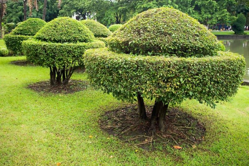 Het in orde maken van de boom is een mooie vorm royalty-vrije stock foto's