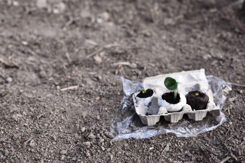 Het organische Eierschaal Tuinieren royalty-vrije stock foto