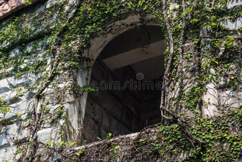 het oude birckhuis met klimmer doorbladert royalty-vrije stock fotografie